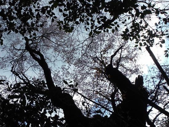 上空に桜が…