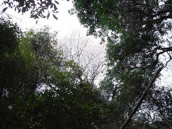 周囲の木々で分かりづらい