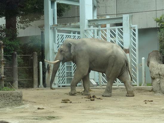 上野動物園なう