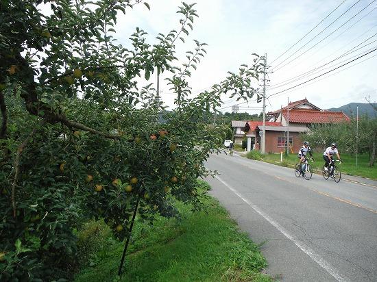 高野のりんご