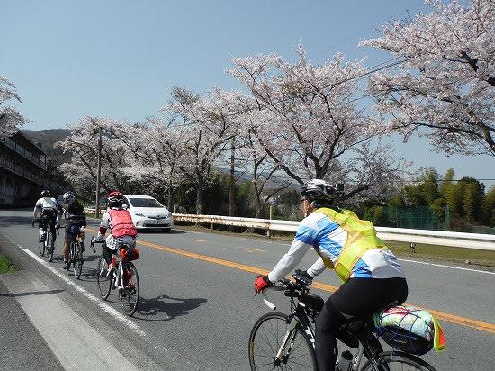 ここも桜きれい