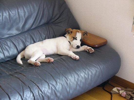 このソファが彼の指定席に