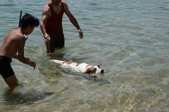無理やり泳がされる
