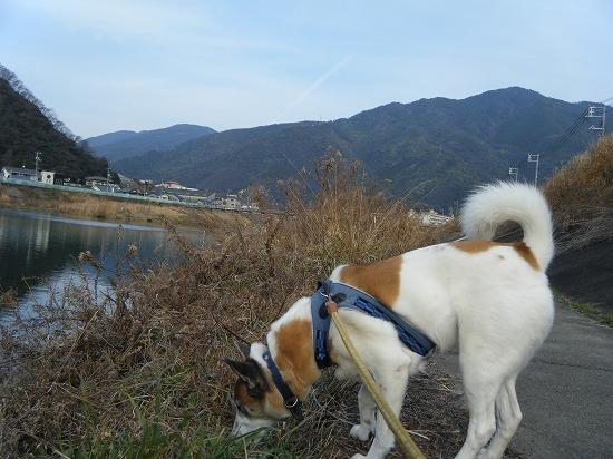川まで遠足♪